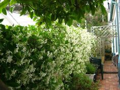 House in Green Point - Ref: 138691 Investment Property, South Africa, Knight, Real Estate, Green, Plants, House, Home, Real Estates