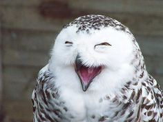 I want to take this owl out for a coffee, and just laugh and tell jokes all day long.