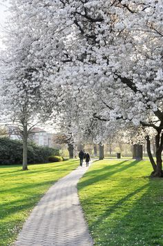 Spring in Copenhagen | Where to Find the Flowers | oregon girl around the world