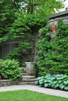 Three Dogs in a Garden