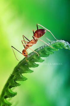 Ant: la hormiga