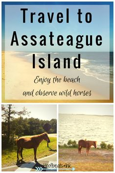Watch wild horses, stick your feet in the sand and enjoy the water with your loved ones. Travel to Assateague Island - via Hoofbeats and Ink.