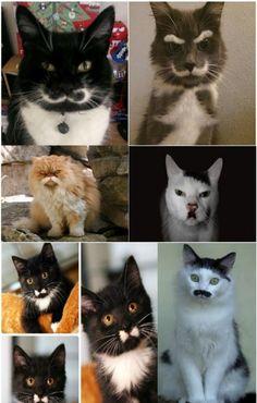 cat-mustashe