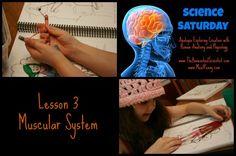 Science Saturday: Apologia's Anatomy & Physiology (Lesson Science Lesson Plans, Science Lessons, Apologia Anatomy, Human Muscular System, Human Body Unit, Human Anatomy And Physiology, Medical Coding, School Fun, School Stuff