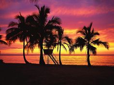 Google Image Result for http://www.flashcoo.com/nature/beach_trees/images/%255Bwallcoo.com%255D_beach_coconut_palm_53250.jpg
