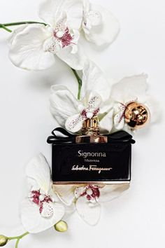 dolce and gabbana perfume Blue Perfume, Perfume Bottles, Eos Lip Balm, Kerastase, Kajal, Perfume Making, Best Fragrances, Cosmetics & Perfume, Essie