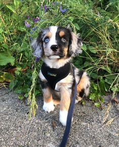 Dog Breeds For Kids 40 Cute Animal Pictures To Make Your Day Better.Dog Breeds For Kids 40 Cute Animal Pictures To Make Your Day Better Cute Dogs Breeds, Cute Dogs And Puppies, Baby Dogs, Pet Dogs, Doggies, Cutest Puppy Breeds, Mix Breed Dogs, Cutest Dog Mixes, Unusual Dog Breeds