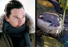 wintertime for otters and Benedicts