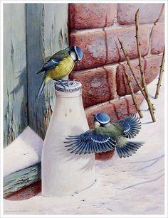 Beautiful paintings of birds; Birds of Raymond Watson Watercolor Animals, Watercolor Paintings, Christmas Bird, Bird Artwork, Thomas Kinkade, Bird Drawings, Bird Pictures, Wildlife Art, Animal Paintings