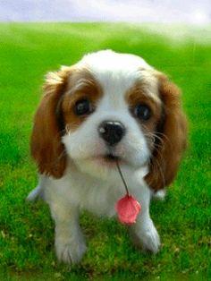 Собака с цветком - анимация на телефон №1271751