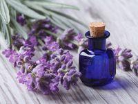 Voňavá lékárna: Na co vám pomůže levandule, meduňka, máta, šalvěj