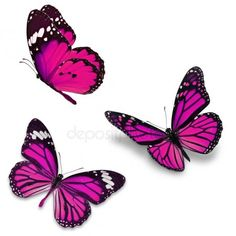 Picture of Three pink butterfly, isolated on white background stock photo, images and stock photography. Butterfly Background, Vintage Butterfly, Purple Butterfly, Monarch Butterfly, Papillon Rose, Hand Of Fatima, Photo Wall Collage, Illustrations, Paper Texture