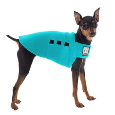 Turquoise Miniature Pinscher Dog Tummy Warmer, great for warmth, anxiety and laying with our dog rain coat. High performance material. Made in the USA.