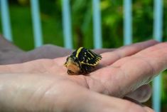 Even when you're feeling small, face life with a big attitude. 20 Life Lessons We Can Learn From Turtles And Tortoises Tortoise Care, Tortoise Turtle, Tortoise Habitat, Turtle Time, Tiny Turtle, Olivia De Havilland, Baby Animals, Funny Animals, Cute Animals