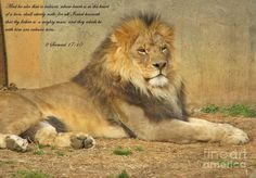2 Samuel And he also that is valiant, whose heart is as the heart of a lion, shall utterly melt, for all Israel knoweth that thy father is a mighty man and they which be with him are valiant men. Samuel 17, Heart Of A Lion, Tribe Of Judah, Jesus Painting, Prophetic Art, Great King, Lion Of Judah, That One Person, Scripture Art