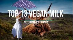 Top 13 Vegan Milk Alternatives to Dairy Vegan Milk, Vegan Food, Vegan Recipes, Milk Alternatives, Dairy, Youtube, Blog, Vegan Sos Free, Vegan Meals