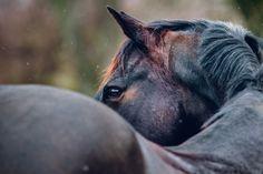 Horse Photography: Purple Horse Designs   Horse Portrait   Fine Art Equine Photographer   Eastern Shore of Maryland   Oldenburg   www.purplehorsedesigns.com