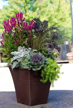 fall planters fall pots planter ideas with mums for your fall container planter fall planters for front porch fall plants for pots in shade Outdoor Pots, Outdoor Flowers, Fall Planters, Flower Planters, Fall Flower Pots, Outside Fall Decorations, Fall Containers, Succulent Containers, Container Flowers