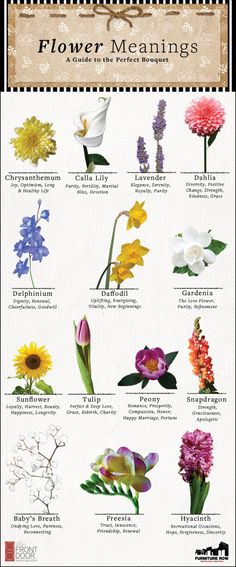 INFOGRAPHIC: Say it with sweet smelling flowers with our Guide to the Perfect Bouquet. flowers name Flower Meanings: A Guide to the Perfect Bouquet - The Front Door By Furniture Row Book Flowers, Flowers Nature, Beautiful Flowers, Meaning Of Sunflower, Flowers With Meaning, Lily Meaning, Sogetsu Ikebana, Smelling Flowers, Flower Meanings