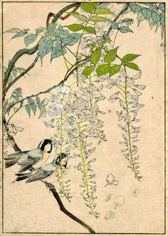 1891 Orig Imao KEINEN JAPANESE WOODBLOCK PRINT Birds & Flowers Wisteria Coal tit #NishimuraSozaemon