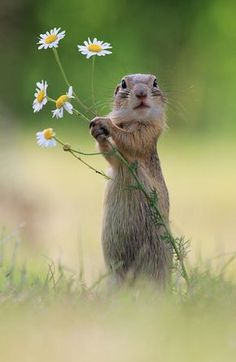 European Ground Squirrel - title A Handful of Flowers