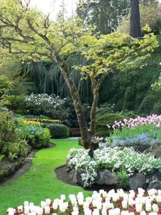 Butchart Gardens!  Wish my yard looked like this...tranquility!