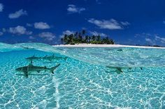 Maldives - some of the best snorkeling and diving in the world, and one of the few places in the world with resident whale sharks. i WILL swim with them...one day.