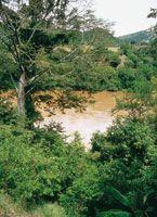 El río Magdalena antes de llegar a los rápidos de Honda.