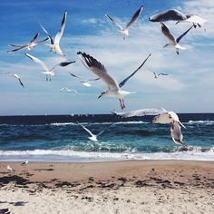 Shared by Yome. Find images and videos about summer, beach and sky on We Heart It - the app to get lost in what you love. Ocean Scenes, Beach Scenes, Beach Waves, Ocean Waves, Ukraine Beaches, Odessa Beach, Nicolas Vanier, Sea Storm, Bird Artwork