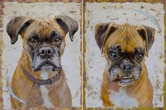 """Buddy"" & ""Lady,"" both oil on panel, 12 x 16.  Boxers of NY state!  www.danahawk.com"
