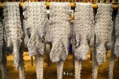 Clarín HD - COCODRILOS. Las enormes granjas de cocodrilos en...