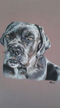 Wilco, chien Cane Corso Pastels secs