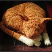 definitely prefer dogs, but this is so cute! Jingga the Orange Tabby Cat - via @Craftsy