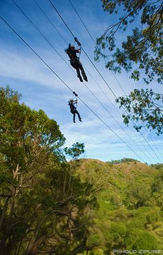 Ride high through the treetops on a ZIPLINE! Never before has an activity taken Maui by storm like Ziplining! Fun for the whole family, (check weight limits), a zipline tour offers a fun, safe, adventurous way to see the island. Maui Honeymoon, Hawaii Vacation, Dream Vacations, Vacation Spots, Vacation Ideas, Top Vacations, Oh The Places You'll Go, Places To Travel, Maui Activities
