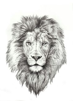 Best Lion Tattoo Collection - best tattoo - best tattoo for women - be Lion Head Tattoos, Mens Lion Tattoo, Leo Tattoos, Animal Tattoos, Body Art Tattoos, Lion Thigh Tattoo, Lion Tattoo On Back, Tattos, Tattoos Skull