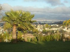 Palma mexicana  en Jardín de Fiestas Calypso Gardens