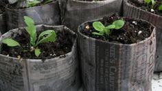 Newspaper seed planters VIDEO tutorial