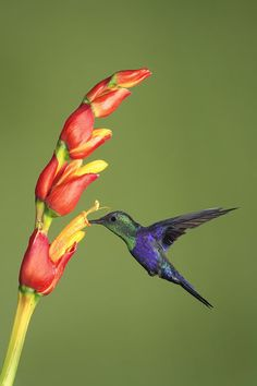 ~~Violet-crowned woodnymph hummingbird~~...do you have a feeder for the humming birds?