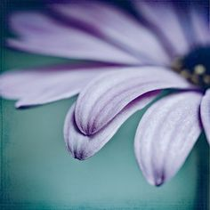 '(together)' von joshi bei artflakes.com als Poster oder Kunstdruck $16.63 #Fotografie #closeup #close #nah #Makro #Makrofotografie #Blüte #Blumen #Flower #flowers #nature #Natur #Naturliebhaber #naturelovers #detail #Schönheit #Textur #Photoshop #dekorativ #fineart #fine art #kunstvoll #art #kunstfotografie