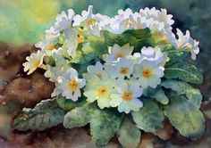 Ann Mortimer's Painting Blog: Primroses...steps one to five.
