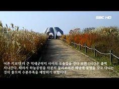 억새꽃 여행 서울 상암동 하늘공원 (서울1TV)