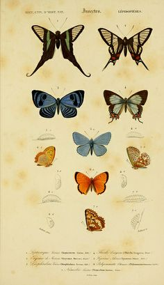 n184_w1150 by BioDivLibrary, via Flickr