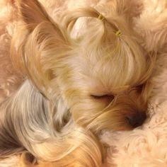 Puppuru is sleeping~