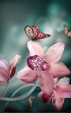 Beautiful Flowers Garden: Beautiful Butterfly on Pink Orchids. !IEC