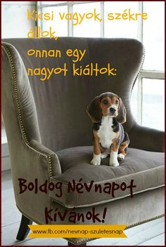 Akinak kivanunk boldog nevnapot! Gina,Horst,Beus Happy Name Day, Birthday Wishes, Happy Birthday, Special Day, Names, Funny, Quotes, Animals, Tulips