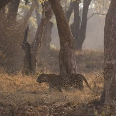 Wildlife and Wildlife Photography: Wildlife and Wildlife Photography - Bandipur Trip,...