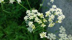 Herbs, Plants, Photography, Herb, Flora, Plant, Photograph, Fotografie, Planting