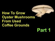 How To Grow Oyster Mushrooms From Used Coffee Grounds Cheap And Easy - Part 1 - YouTube (www.ChefBrandy.com)