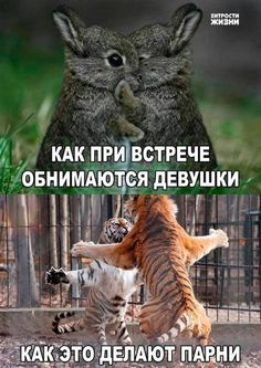 24 best Funny Memes images & Hilarious Pictures If you're having a hard week. We know that the world is strange, but cute funny memes cat and funny pictures Funny Animal Jokes, Cute Funny Animals, Funny Animal Pictures, Cute Baby Animals, Funny Cute, Haha Funny, Funny Stuff, Hilarious Pictures, Cute Animal Humor