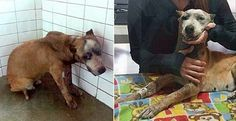 Mexicans tape pregnant dog's mouth shut with fireworks and light her up! We want justice for Chola! | YouSignAnimals.org